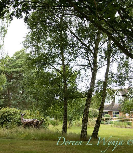 Beechleigh Garden - Jacky O'Leary garden designer_2952.jpg