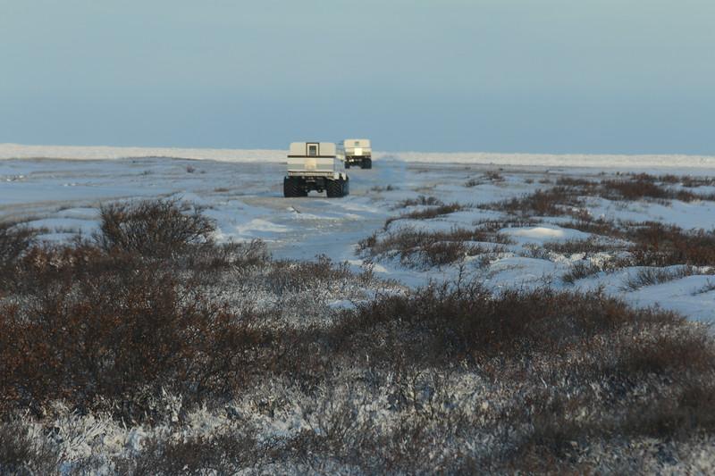 Polar rovers on the tundra