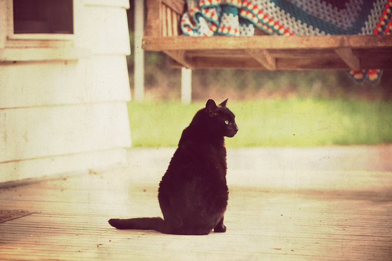 "Two Black Cats<br /> <br /> This is BOBB (Big Old Black Boy) with the green eyes.  Bobb arrived at our house several years ago--even with all the dogs.  He started by living under the front porch.  We referred to him as ""the old man under the porch.""  We discovered later that he originally belonged to one of our church members.  They called him Bijou because his eyes were like emeralds.  They moved about 6 to 8 miles from their original home, taking Bijou and their other cats with them.  But neighborhood dogs chased the cats, scaring many of them off or perhaps killing them.  Our friends thought Bijou had been killed.  Several years later, I was telling her how, out of the blue, Bobb had taken up under our porch.  She asked if he had some white fur on his hind leg.  I told her no, but later noticed that he did.  She stopped by one day after church and, sure enough, it was Bijou.  He had traveled several miles to finally feel safe at our home.  She said he was neutered in the fall of 1998, so he is about 15 years old."