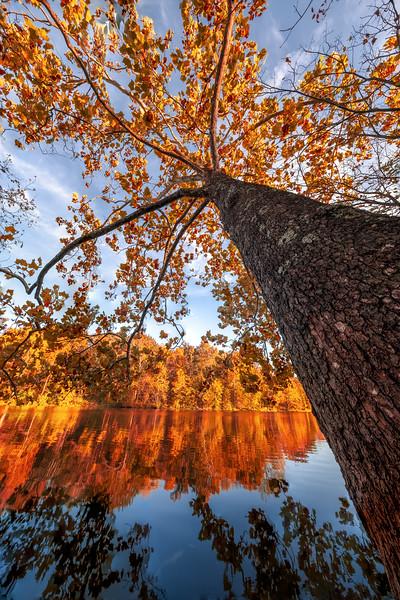 McNeely Lake Park