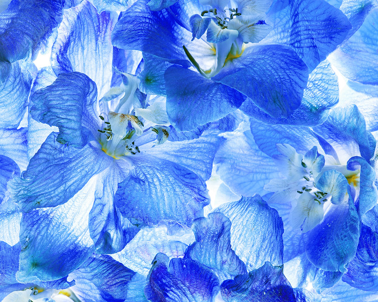 delphinium collage
