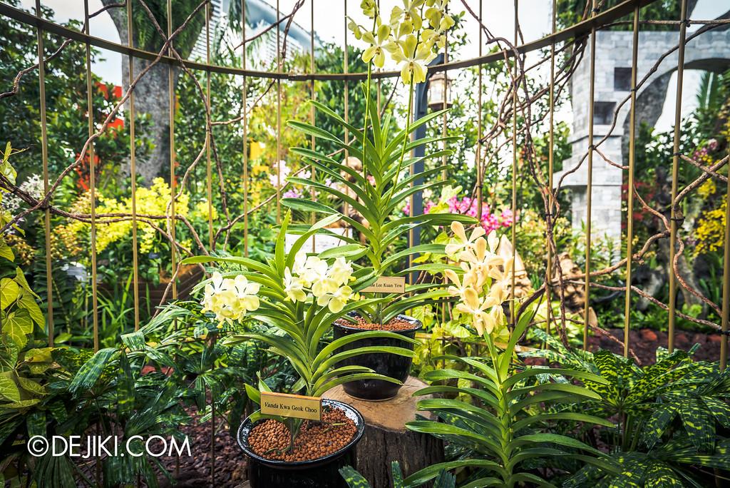 Singapore Garden Festival 2016 - Secret Garden Aranda Lee Kuan Yew, Vanda Kwa Geok Choo