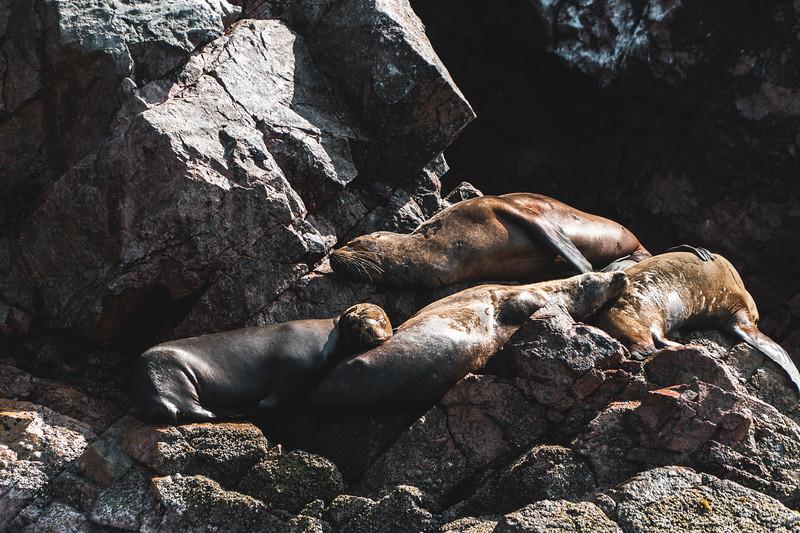 sea lion on the rocks at Islas Ballestas, Peru
