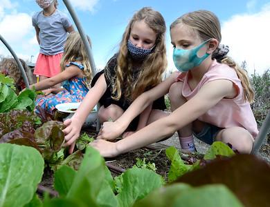 Photos: Louisville Elementary Participate in Garden to Table