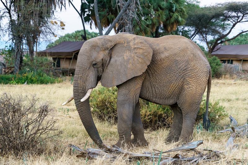 Kenya 2015-01366.jpg