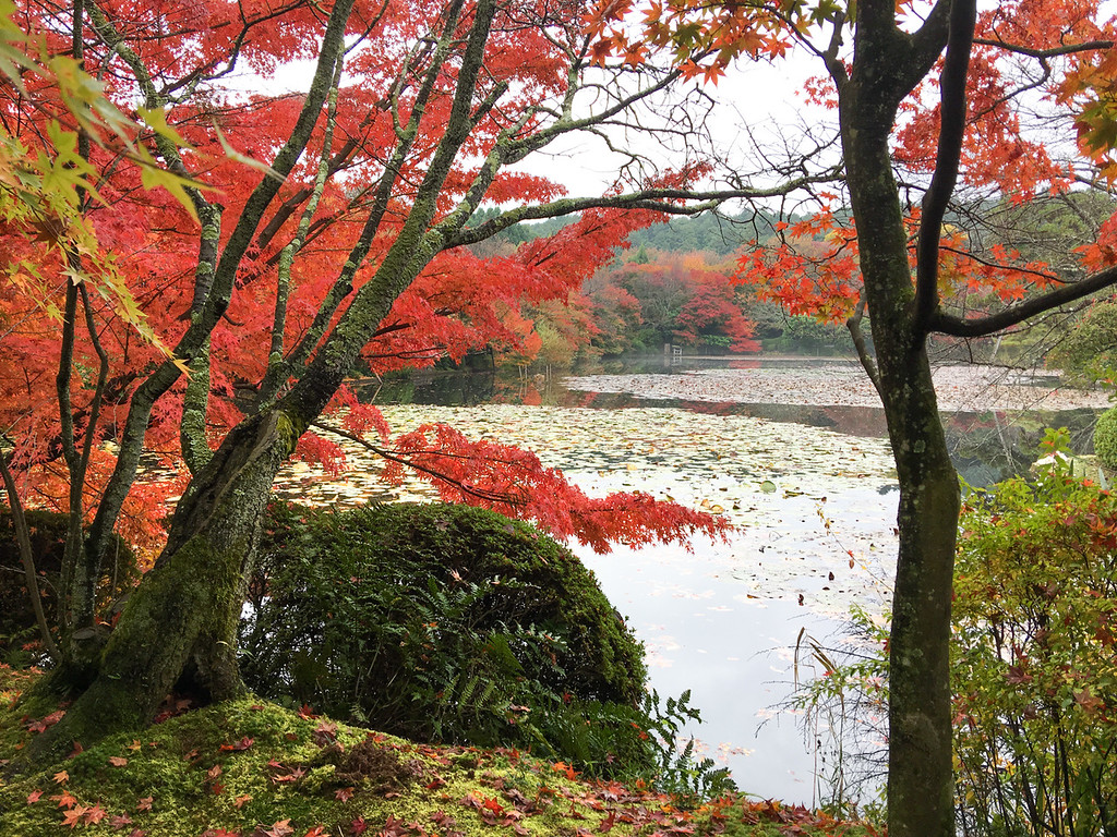 Ryoan-ji Temple Lake, Kyoto