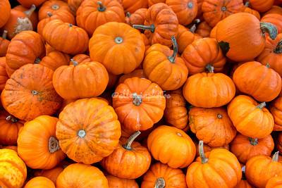 Diversity in the Pumpkin Patch