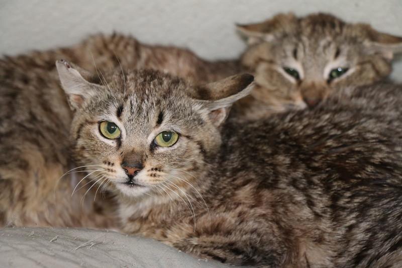 Feral kittens - 0323015 - 2.JPG