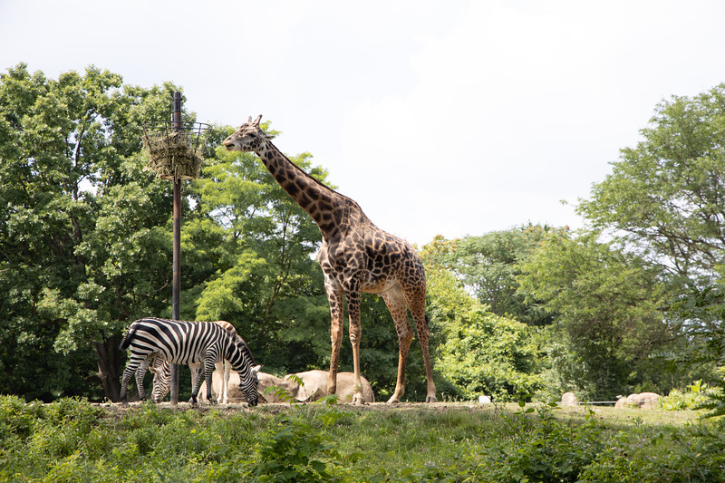 Pittsburgh Zoo-7098.jpg