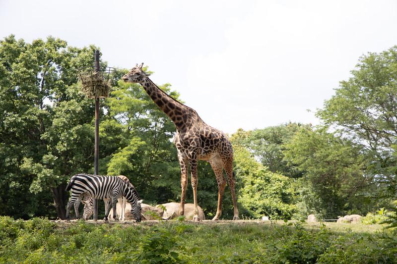 Pittsburgh Zoo-7098.jpg