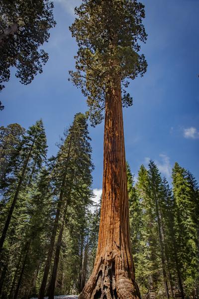 Sequoia-4856.jpg