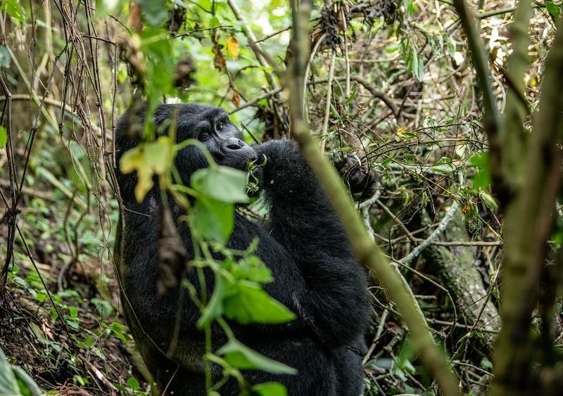 Uganda_T_Gor-1134.jpg