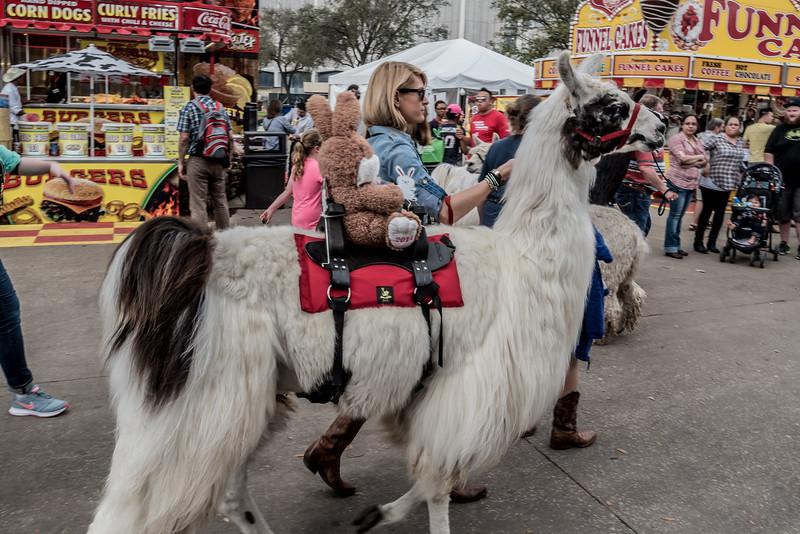 2015 - HLSR Llama and Alpaca