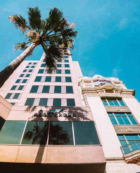 Palm shadow on building.jpg