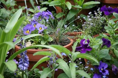 10 - Fleur bleue