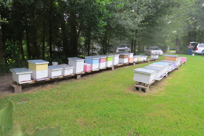hives ready to work.JPG