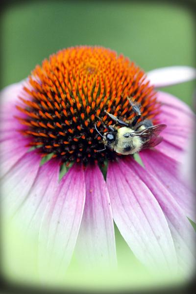 The Bees Knees copy.jpg