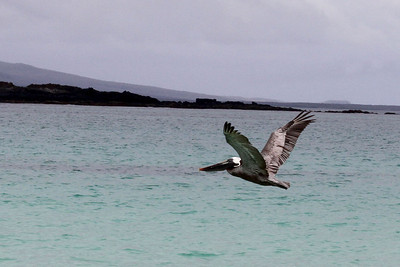 Galapagos Islands-- birds