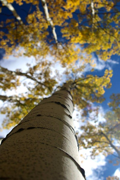 Tree Hugger