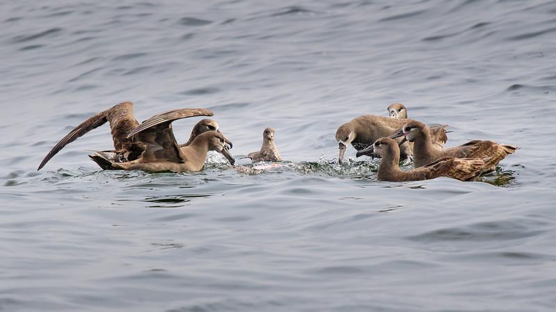 Monterey Bay - Monterey, CA USA
