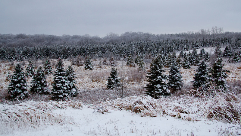 Snow Day 002.jpg