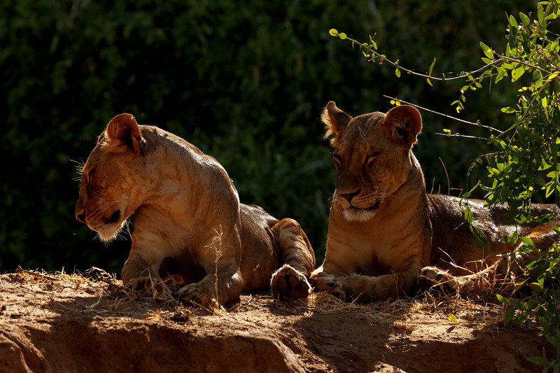 Kenya 2015-01556.jpg