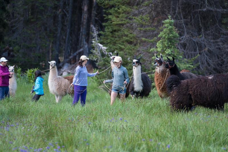 Jay Waltmunson Photography - Wallowa Llamas Reunion - 214.jpg