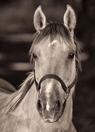 Latta Trail Horses 2014