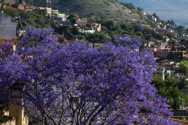 Around Town, San Miguel de Allende