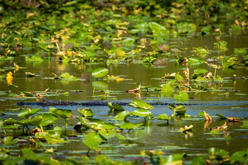 Everglades (51 of 60).jpg