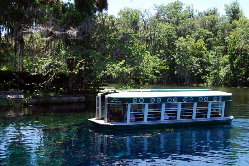 2014 Silver Springs, Florida (26).JPG