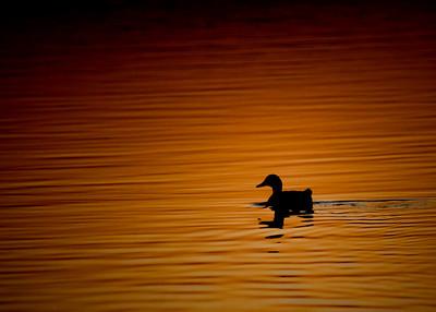 Joe Pool Lake at Dawn