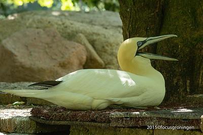 Vogels Jan van Gent