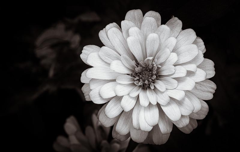 flora 091014-.jpg