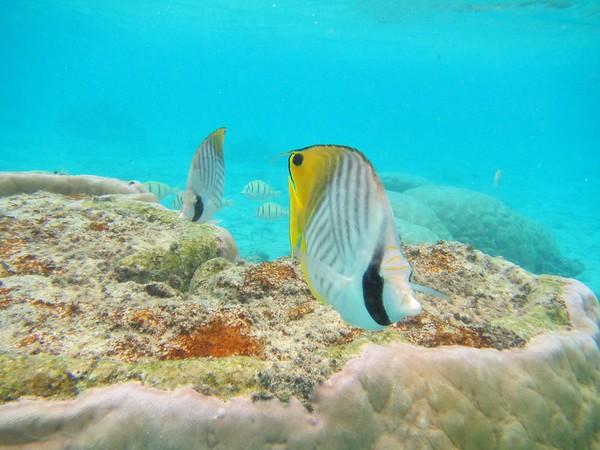 Rarotonga Sea