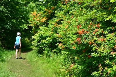 Appalachian Trail by Hot Springs, NC