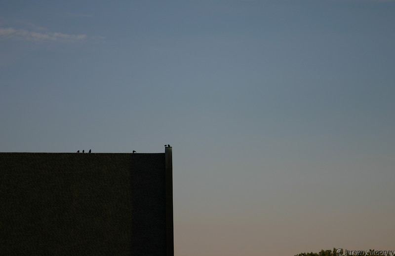Birds on the top of Benson Great Hall
