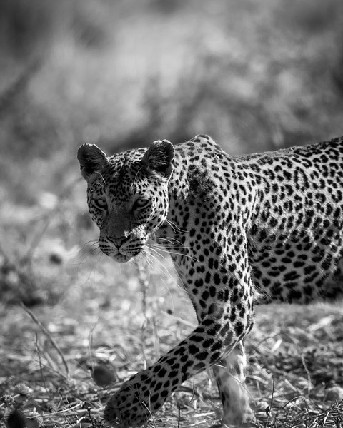 Botswana_June_2017 (5076 of 6179).jpg