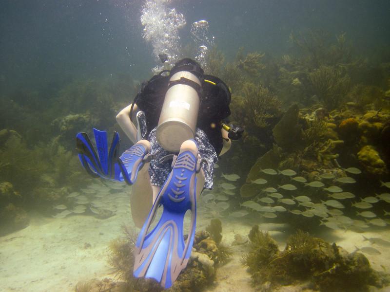 islamorada-diving-1.jpg