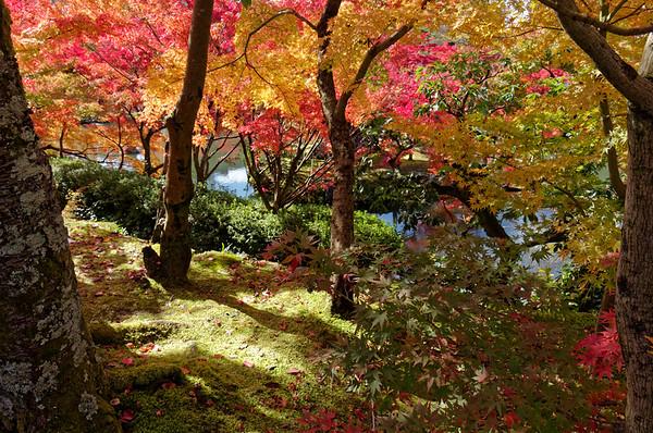 Eikan-do Temple, Kyoto, in Fall Color