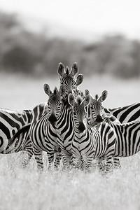 Tanzania and Botswana