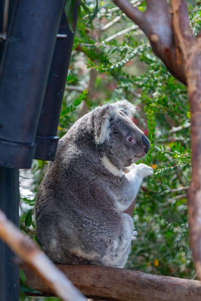 SD Zoo 3.20-113.jpg