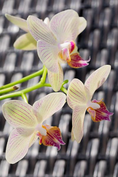 FineArt_Flowers_051520_0361.jpg