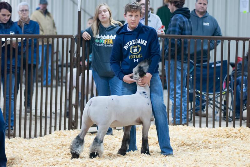kay_county_showdown_sheep_20191207-90.jpg