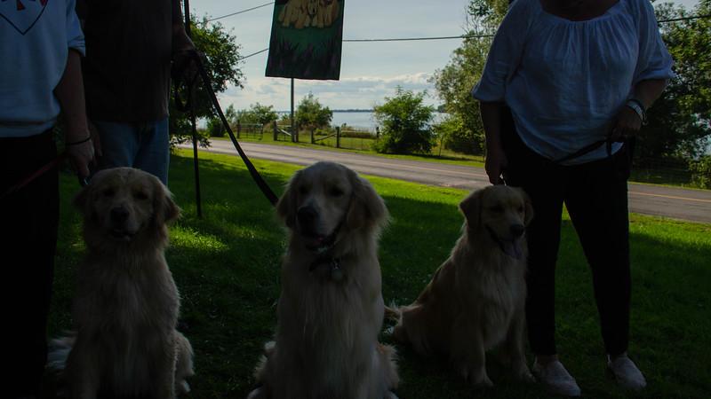 PuppyParty18-595.jpg