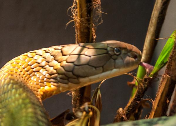 Audubon Zoo 3/15/14