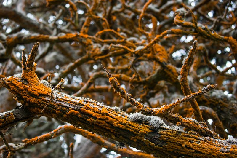 Orange Lichen-6496.jpg