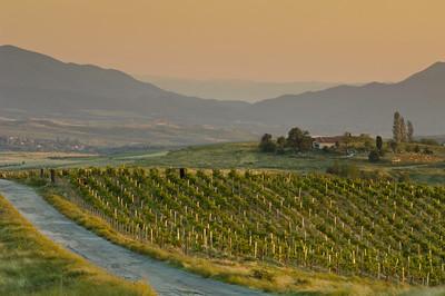 Vineyards near Melnik, The Pirin Mountains, Bulgaria