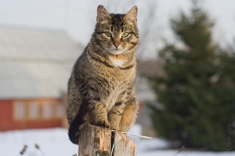 outdoor cat care in winter