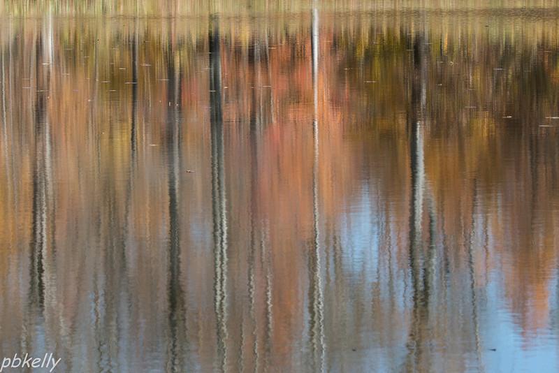 Reflections 110313-8.jpg
